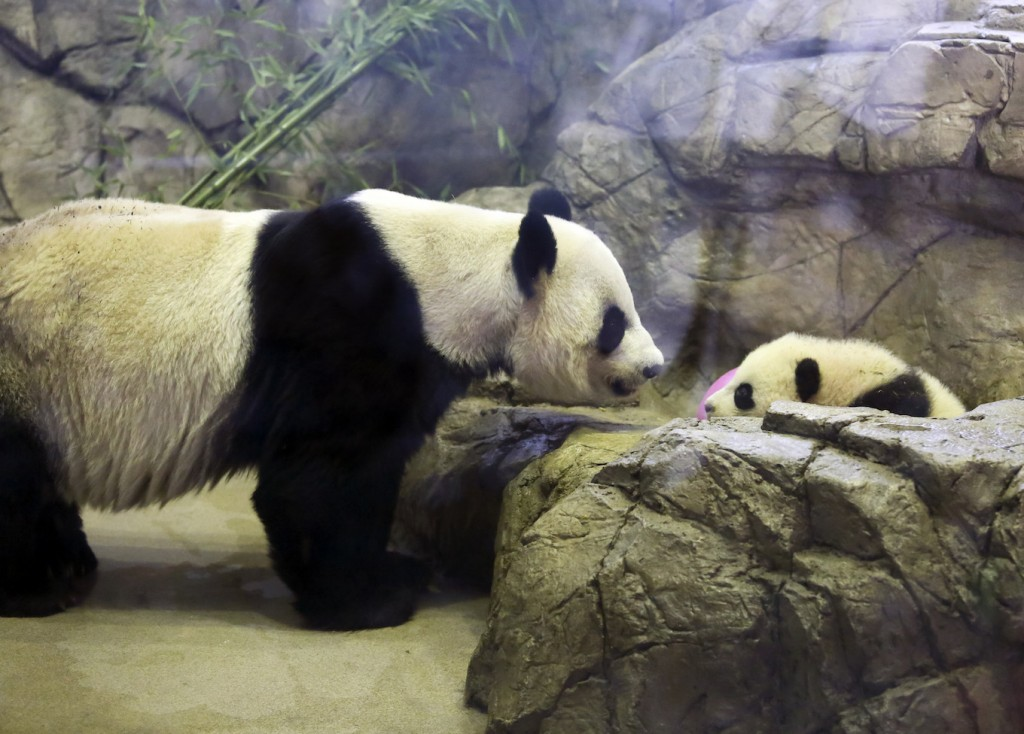 What is the difference between the Panda and Penguin algorithms?